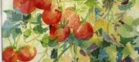 Tomatoes, watercolor